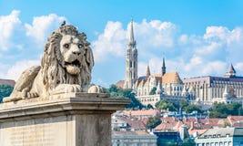 Lejonstaty på den Chain bron i Budapest Danube River hungary royaltyfri fotografi