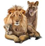 Lejonstolthet royaltyfri illustrationer