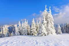Lejos en las altas montañas cubiertas con el soporte blanco de la nieve pocos árboles verdes en los copos de nieve mágicos Imágenes de archivo libres de regalías