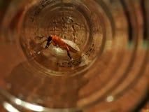 Lejos está una mosca que intenta siempre foto de archivo libre de regalías