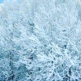 Lek av den kalla vintern arkivfoton