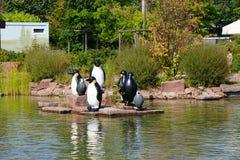 Lek av pingvin royaltyfri foto