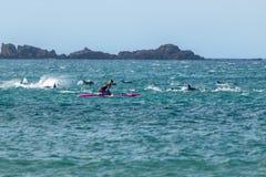 Lek för gemensamma delfin med skovelboarderen Arkivbild