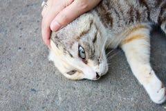 Lek med katten Arkivbilder