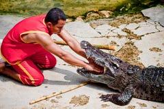 Lek med krokodilen Arkivfoto
