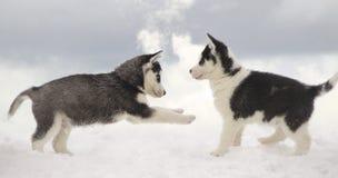 Lek på en frost Royaltyfri Foto