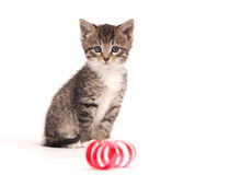 leka band för kattunge Royaltyfri Fotografi