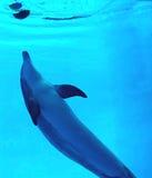 leka för delfin Arkivbilder