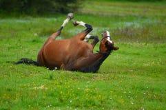 leka för häst Arkivfoto