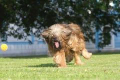 leka för hund Arkivfoto