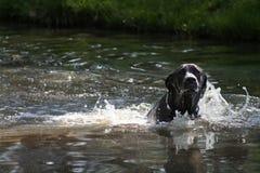 leka för hund royaltyfri foto