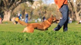 leka för hund stock video