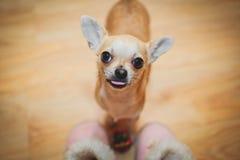 leka för hund Royaltyfria Bilder