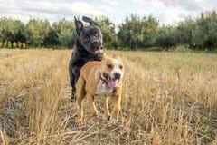 leka för hundar royaltyfri fotografi