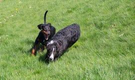 leka för hundar arkivfoto
