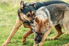 leka för hundar Arkivbild