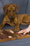 leka för hundgyckel Arkivfoto