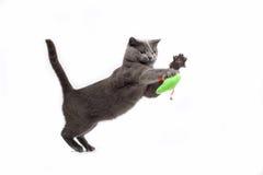 leka för katt Arkivbild