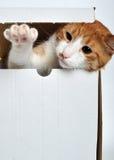 leka för katt Royaltyfria Bilder