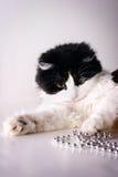 leka för katt Arkivfoton