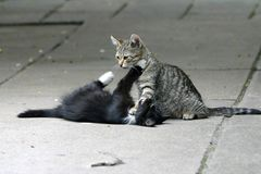 leka för katter arkivfoto