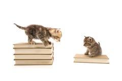 leka för kattungar Arkivfoto