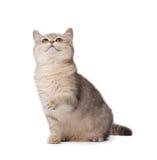 leka för kattunge Arkivbilder
