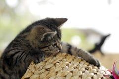 leka för kattunge Fotografering för Bildbyråer