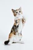 leka för kattunge Arkivfoto