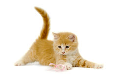 leka för kattunge Arkivbild