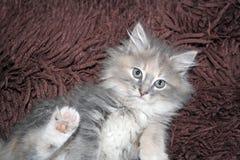 leka för kattunge Royaltyfria Foton
