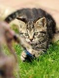 leka för kattunge Royaltyfri Bild