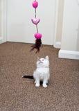 Leka för kattunge Arkivfoton