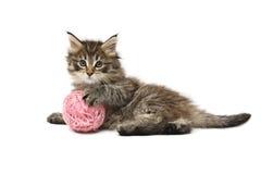leka för kattunge Royaltyfri Foto