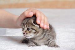 leka för kattunge för pojke home Royaltyfri Foto