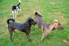 leka för hundar Royaltyfria Foton