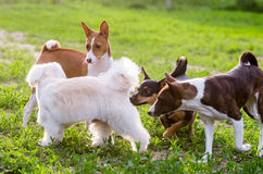 leka för hundar Arkivfoton