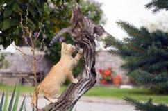 leka för katter Arkivbilder