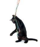 leka garn för svart kattunge Fotografering för Bildbyråer