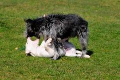 Leka hundar arkivfoton