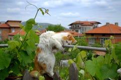 Leka katt Fotografering för Bildbyråer
