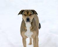 leka snow för hund Arkivfoton