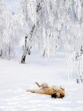 leka snow för hund royaltyfri foto