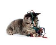 leka tabbygarn för gullig kattunge Royaltyfri Bild