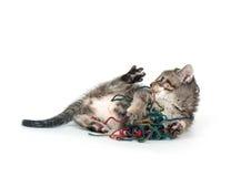 leka tabbygarn för gullig kattunge Fotografering för Bildbyråer