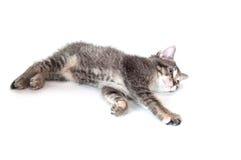 leka tabbygarn för gullig kattunge Royaltyfri Fotografi