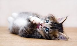 leka tabell för home kattunge Royaltyfria Bilder