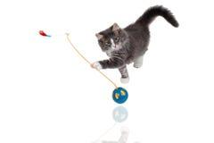 leka tid för gullig kattunge Arkivfoton