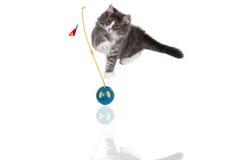leka tid för gullig kattunge 7 Arkivbild