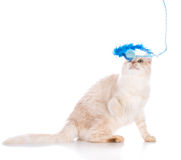 leka toy för kattunge Fotografering för Bildbyråer